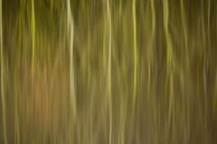 Abstract reflection of reed beds and trees in still water Stock Photo