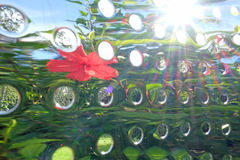Abstract reflections of garden Royalty Free Stock Photography