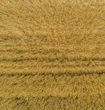 Abstract representation of a young wheat field by vertical view from above, aerial view. Made with drone Stock Images