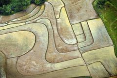 Abstract Rice Fields. Aerial view of Central Luzon rice fields royalty free stock photos