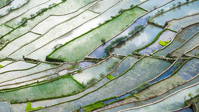 Abstract rice terraces texture with sky reflection. Banaue, Phil Royalty Free Stock Images