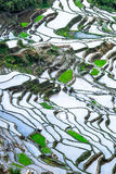 Abstract rice terraces texture with sky reflection. Banaue, Philippines Stock Image