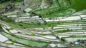 Abstract rice terraces texture with sky reflection. Banaue, Philippines Stock Photo