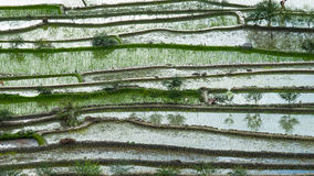 Abstract rice terraces texture with sky reflection. Banaue, Philippines Royalty Free Stock Images
