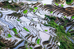 Abstract rice terraces texture with sky reflection. Banaue, Philippines Stock Images