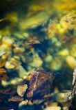 Abstract River Rocks Stock Image