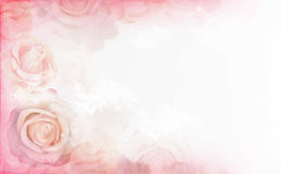 Abstract romantic rose horizontal background. Delicate design template for greeting cards and invitations. Royalty Free Stock Images
