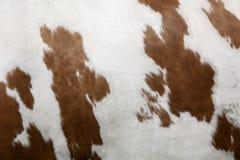 Abstract rood en wit patroon aan kant van koe Royalty-vrije Stock Foto