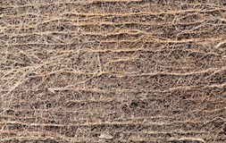 Abstract Roots of  tree Texture Background Royalty Free Stock Images