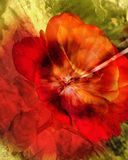 Abstract rose Stock Photo