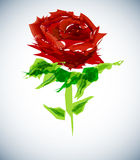 Abstract rose background Stock Photos