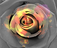 Abstract rose background. Royalty Free Stock Photo