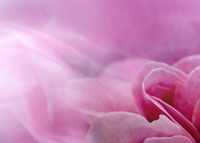 Abstract rose royalty free stock images