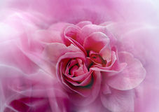 Abstract rose Stock Photography