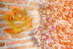 Abstract rose on the brick wallpaper Stock Photography
