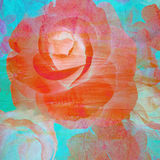 Abstract rose flower paint on wall background Stock Image
