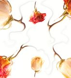 Abstract rose frame Stock Image