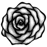 Abstract rose free-hand drawing in a graphic style points and lines. Royalty Free Stock Photos