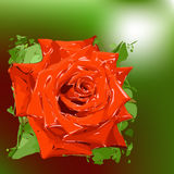 Abstract rose on green background. Stock Images