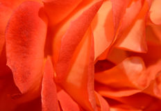 Abstract rose petals Stock Image