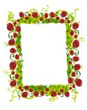 Abstract Rose Vine Border Royalty Free Stock Photography