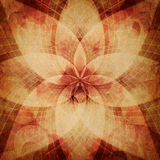 Abstract rosette background Stock Image
