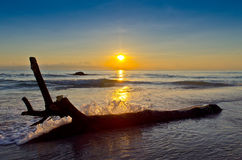Abstract Rotten log at the beach sunset sea wave s Royalty Free Stock Image