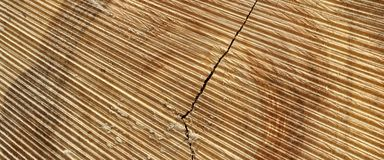 Abstract Rough Pine Wood Grain Wide Texture Close-up Royalty Free Stock Photography