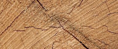Abstract Rough Pine Wood Grain Wide Texture Close-up Royalty Free Stock Photos