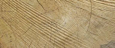 Abstract Rough Pine Wood Grain Wide Texture Close-up Stock Photos