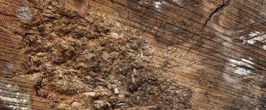 Abstract Rough Pine Wood Grain Wide Texture Close-up Royalty Free Stock Image