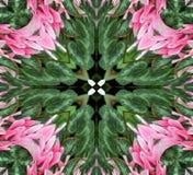 Abstract Roze en Groen Ontwerp Stock Afbeelding