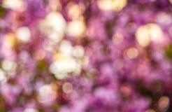 Abstract sakura flower blossom in springtime. Beautiful springtime blur background. Abstract sakura flowers blossom in garden stock image