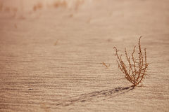 Abstract sand background with sunlight Stock Photography