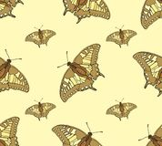 Abstract Seamless Background of Butterflies Stock Image