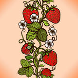 Abstract seamless lace pattern with flowers, leaves and strawberry. Stock Images