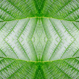 Abstract seamless leaf pattern. texture, nature. Royalty Free Stock Photos