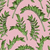 Abstract seamless leaves pattern with brunch of tropical plant. Vector illustration Royalty Free Stock Images