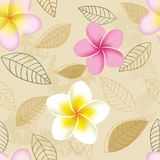 Abstract seamless pattern with plumeria flowers Stock Photo