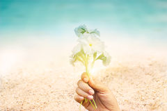 Abstract seaside flowers in hand on sand sea beach summer day Stock Photography