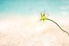 Abstract seaside flowers on sand sea beach summer day  Royalty Free Stock Photo