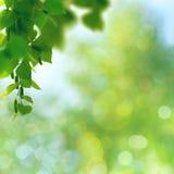 Abstract seasonal backgrounds Royalty Free Stock Image