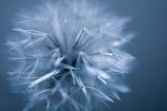 Abstract seed ball Royalty Free Stock Photography