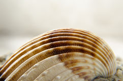 Abstract shell close up studio shoot Royalty Free Stock Image