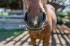 An abstract shot of the muzzle of a chestnut horse.  Royalty Free Stock Photo
