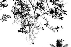 Abstract silhouet van bladboom op witte achtergrond Wit en zwarte Royalty-vrije Stock Foto's