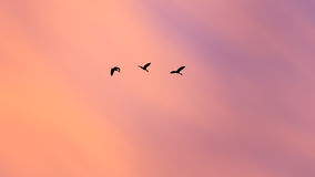 Abstract silhouette birds flying on beautiful sunset sky Royalty Free Stock Photography