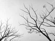 Abstract Silhouette Dried tree monotone Royalty Free Stock Photography