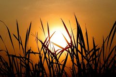 Abstract silhouette figure with sunrise. And grass Royalty Free Stock Photography