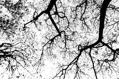 Abstract silhouette of tree. Royalty Free Stock Images